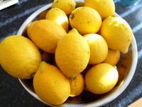 レモン - 坂の上のキッチンから