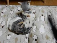 梅ちゃんレポート(23) - 愛犬家の猫日記