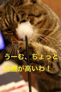 にゃんこ劇場「ななちゃん、行きまーす」 - ゆきなそう  猫とガーデニングの日記