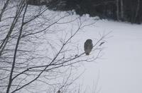 OWL (ふくろう) -2 - ファルマウスミー