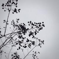 冬色 - ドコカ遠くと日々のアシモト