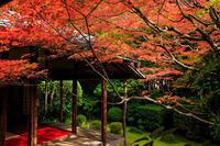 京都の紅葉2016 静かなお庭の紅葉(桂春院) - 花景色-K.W.C. PhotoBlog