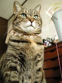 ちょこが来た日 - 猫の銅版画