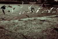 鳥 - 幸せな写真時間