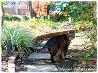 ぼくのペース - お散歩ねこのお庭