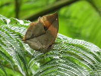 八重山番外編   新年の蝶(つづき) - 蝶のいる風景blog
