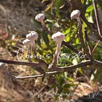 お庭は春の準備中 - misaの庭暮らし~Abandon~