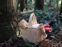ニセモノ狐の襟巻き - 可愛いものノート