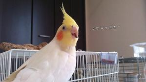 ニワトリさんと卵さんとヒヨコさんと我が家の仲間達と(*´ー`*) -