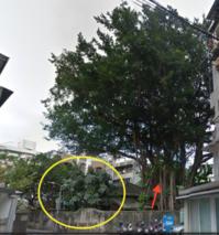 受保護樹木のデータ@台北市文化局  byモニカ - 海峡web版