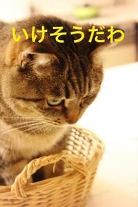 にゃんこ劇場「しっぽ出てるよ」 - ゆきなそう  猫とガーデニングの日記