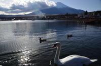 富士山のおひざ元の湖にハクチョウどもが戯れる - 風の香に誘われて 風景のふぉと缶