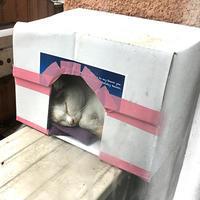 あ! - ぶつぶつ独り言2(うちの猫ら2016)