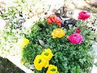 仕事初めはナーセリー廻りから 0105 - Healing Garden  ー草庭ー