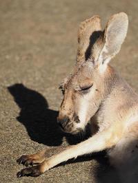1月12日(木) 陽だまり - ほのぼの動物写真日記
