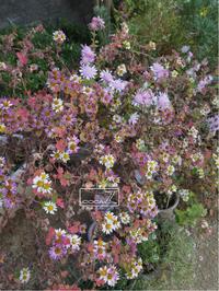 植物的生活763 - Atelier Botanique COCA-Z