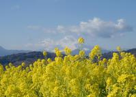 菜の花パワー - ほほえみ
