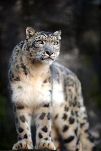 新春の「ミミ」と「ヴァル」 - 動物園放浪記