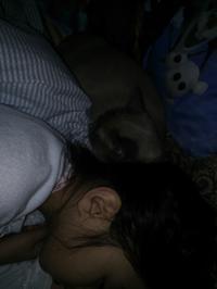 おやすみなさ~い フローラ&娘ちゃん - MINKWIN Cattery &Pretty Aki