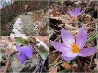 雪分けて咲くクロッカスと聖フランチェスコゆかりの洞窟・教会、リエーティ - ペルージャ イタリア語・日本語教師 なおこのブログ - Fotoblog da Perugia