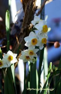 朝の光の中で - 花と風の薫り