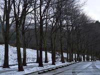 #495 樹木公園 - 想い出cameraパートⅢ