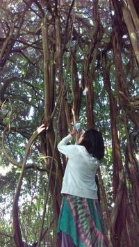 ヒロの街観光 - Nature Care