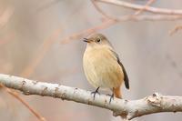 2017年鳥撮り初めの野鳥たち・1♪ - happy-cafe*vol.2