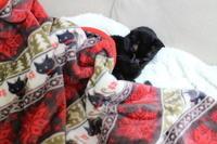 黒猫毛布 - あずきのばあばの、のんびり日記