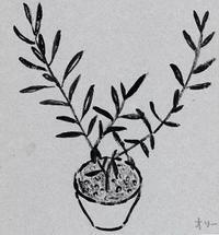 オリーブ植え替え - たなかきょおこ-旅する絵描きの絵日記/Kyoko Tanaka Illustrated Diary