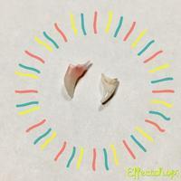 うぉっ?!猫の歯が抜けた・・・~乳歯、生え変わり中デス~ - ササリーヌ伍長のズギューンでドギューンでゴゴゴな日常 2