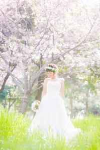桜撮影 - maru*photo   カメラマン 住本 真理子