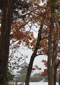 斑鳩町 法起寺 遠望 - 魅せられて大和路