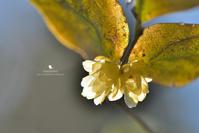 春はじめ - お花びより