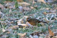 あまり撮らない鳥ですが - 季節の映ろひ