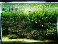 【水草用LED】いつの間にかオールLED化【購入の参考に】 - 癒しのアクアライフ