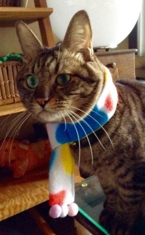 《トラちゃん占いは毎月1日》地震体感と検証 - 猫丸ねずみの大荒れトーク
