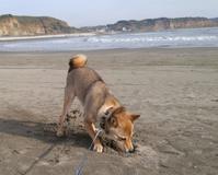 足上げ参戦♪ - 犬が西向きゃ尾は東♪