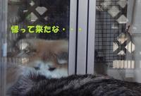 紗弥花ちゃんが怖いのね・・・(^^;) - もももの部屋(家族を待っている保護犬たちと我家の愛犬のブログです)