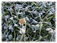 寒満月と金星 - マリカの野草画帖