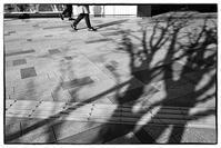 冬の舗道 - Wayside Photos  ☆道端ふぉと☆