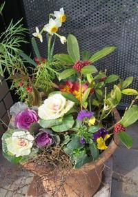 冬の寄せ植えにリメイク - ひだまりの庭 ~ヒネモスノタリ~