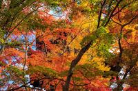 京都の紅葉2016 真如堂周辺の秋景色 - 花景色-K.W.C. PhotoBlog