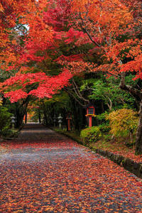 京都の紅葉2016 大原野神社の紅葉 - 花景色-K.W.C. PhotoBlog