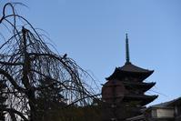 """奈良散歩♪@初詣と鹿 - KLXイチニィゴー""""チビみどりのブログ"""""""