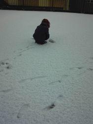 雪だるま - うまこの天袋