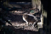 冬の日だまりネコ - 動物園へ行こう