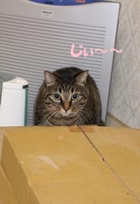 おっとり姫ちゃん - 長老猫とマミーの徒然日記