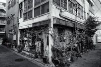 新・東京ラプソディー #6 - 夢幻泡影