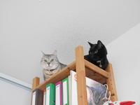 敵は掃除機にあり。 - 『ココんちの(3+1)+1+1猫と一犬のたわごと』 (2+1)+1+1 Pitchouns et 2 Pitchounettes
